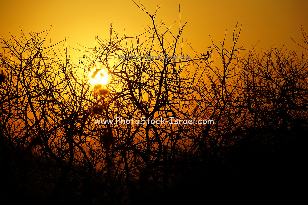 Beautiful yellow and brown Sunset over plants in Crete, Greece