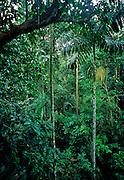 Rainforest, Rio Napo River region, Amazon Basin, Ecuador.