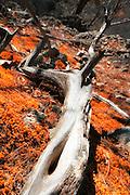 Drift wood on top of mountain