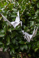 Origami Crane Couple - Origami is the Japanese word for paper folding.  Ori means fold and gami means paper.  It is the art of paper folding that has been handed down from parent to child through the generations.  Origami normally involves the creation of paper forms by folding likenesses of animals, birds, fish, and geometric shapes. The most common are that of cranes. Even young children learn to make them.  The custom originated in Japan when gifts were decorated with nosh which had intricate folded patterns to adorn gifts.  Japanese elementary schools often have origami as part of arts and crafts classes but it is most commonly taught at home.   Traditional origami has been in practice in Japan since the Edo Period.  E sometimes cutting the paper or using nonsquare shapes to start with. The principles of origami are used in many Japanese designs, including industrial ones.