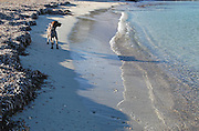 A dog looking at the sea in Ibiza, Balearic Islands, Spain