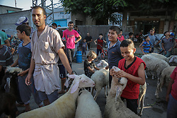 August 31, 2017 - Gaza, Gaza strip, Palestine - Palestinians children play near sacrificial animals in a market ahead of Eid al-Adha celebrations in the northern Gaza Strip, 31 August 2017. Eid al-Adha is one of the most important feasts on the Muslim calendar. It marks the annual Muslim pilgrimage (Hajj) to Mecca, the holiest place in Islam. On the occasion Muslims slaughter sacrific animals and split the meat into three parts, one for the family, one for friends and relatives, and one for the poor and needy. The slaughter commemorates the biblical story of Abraham, who was on the verge of sacrificing his son Ismail to obey God's command when God intervened by substituting a ram in the child's place (Credit Image: © Ezz Al-Zanoun/NurPhoto via ZUMA Press)