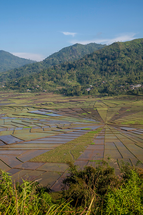'Spider Web' Rice Field, Flores, Indonesia