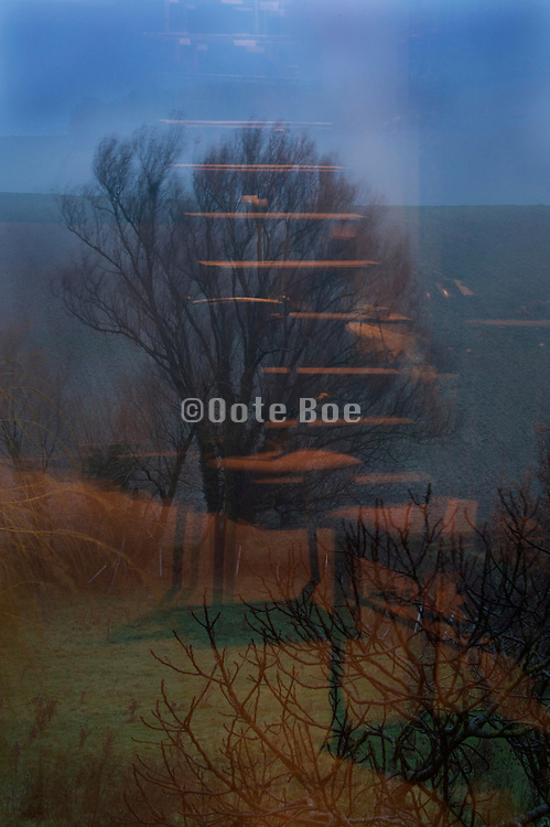 reflection from light from inside with tree seen outside