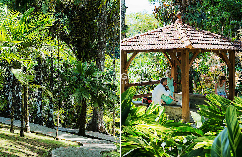Editorial Travel Photography: Jardin de Balata, Balata botanical garden, Fort De France, Martinique Island, Caribbean Sea, Lesser Antilles, France