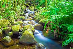 Onomea streams, Hawaii Tropical Botanical Garden, Hilo, Big Island, Hawaii
