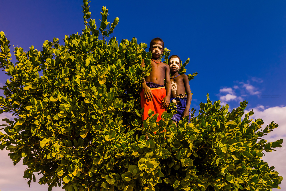 Arbore tribe boys in a tree in their village, Omo Valley, Ethiopia.