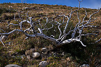 Dead Trees after a Forest Fire in del Paine National Park. Image taken with a Fuji X-T1 camera and Zeiss 32 mm f/1.8 lens.