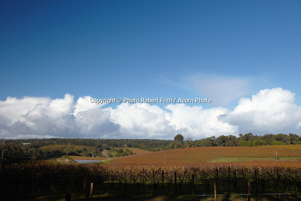 Wilyabrup vineyard vista