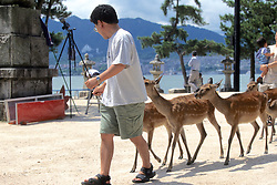 Man With Many Sika Deer