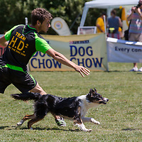 Enrico Collini of Italy competes with his dog Athena during the Flydogs Extreme Distance Frisbee European Championships held in  Budapest, Hungary. Saturday, 16. June 2012. ATTILA VOLGYI