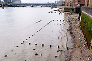 With the wooden piles of old warves and quays revealed in the low tidal waters of the Thames, a member of the public explores the rivers foreshore near the Saxon and Elizabethan-era Queenhithe dock, on 13th September 2021, in London, England. Excavating the Thames foreshore is only allowed by licensed Mudlarkers who scour the mud and shingle for historical artefacts dated from throughout Londons history as a port and ancient settlement.