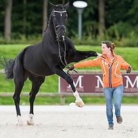 Horse Inspection - FEI European Para Dressage Championships 2015 - Deauville