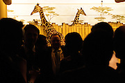 The DuPage Association of Women Lawyers hosts it's annual Zoo Ball at Brookfield Zoo on Friday, November 16th. The gala benefits Safe Harbor, a children's waiting room at the DuPage County Courthouse. © 2012 Brian J. Morowczynski ViaPhotos