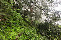 The summit of green mountain on Ascension Island is a mystical place.