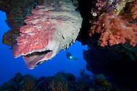Wakatobi National Marine Park, Indonesia