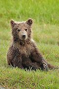 """Images from the 2011 """"Brown Bears of Alaska"""" photo tour"""