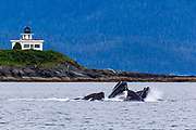 Humpbacks in front of the Point Retreat Lighthouse.