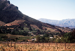 April 14, 2004 - U.S. - KRT TRAVEL STORY SLUGGED: WLT-SOUTHAFRICA KRT PHOTOGRAPH BY ANNE CHALFANT/CONTRA COSTA TIMES (May 9) The Stellenbosch region of the Cape Winelands in South Africa produces world class crisp whites, as well as some stellar reds. Visitors can tour the beautiful vineyards and wineries, enjoy good restaurants and inns, much as they would in California's Napa Valley. (nk) 2004 (Credit Image: © Anne Chalfant/TNS/ZUMAPRESS.com)