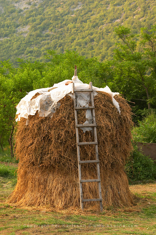 A hay stack haystack with drying hay in the garden, with an old wooden ladder, Durovic Jovo Winery, Dupilo village, wine region south of Podgorica. Vukovici Durovic Jovo Winery near Dupilo. Montenegro, Balkan, Europe.
