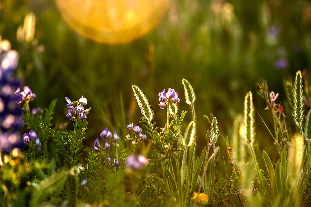 Tiny grasses and flowers intermingle with our favorite spring in Texas wildflowers. Double spread Texas Highways Magazine spring 2015 issue.