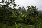 Rice padi fields in the Sideman valley in Bali on 13th June 2018 in Bali, Indonesia. Sidemen is a small valley in eastern Bali and is known in particualr for its agriculture, with rice being the main crop grown.