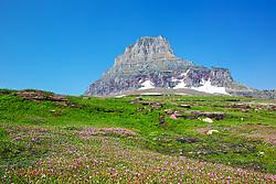 Pink wildflowers, Mt. Clements, Glacier National Park