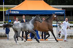 022, Rubycara van Seldsum VDL<br /> KWPN Kampioenschappen 2021<br /> Ermelo <br /> © Hippo Foto - Dirk Caremans<br /> 13/08/2021