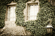 Ivy and stone wall, Honfleur, Normandy, France