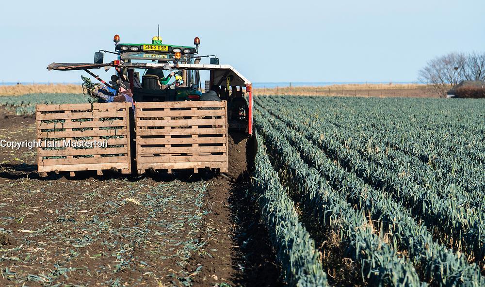 View of farm workers harvesting field of leeks in East Lothian, Scotland, United Kingdom