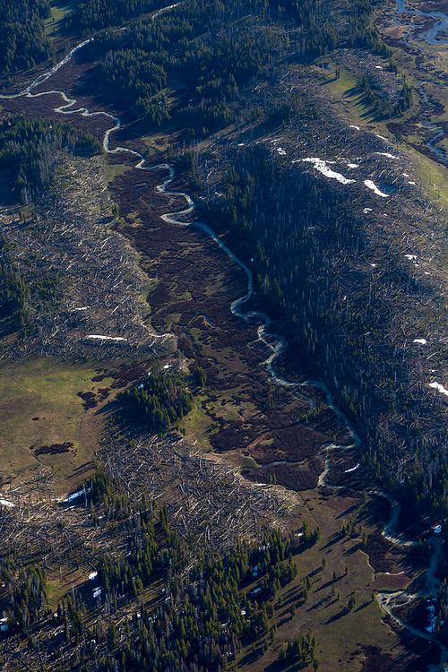 Aerial view of the headwaters of the Snake River in Yellowstone National Park in springtime with fallen timber and streams combining to make the Main Snake River. Licensing and Open Edition Prints