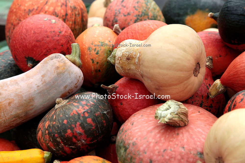 Assortment of Cucurbitaceae various types of squashes, pumpkin, and gourds
