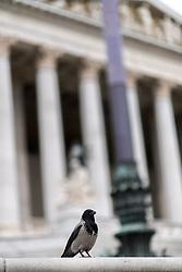 THEMENBILD - Rabe vor dem Österreichischen Parlament. Aufgenommen am 15.05.2017 in Wien, Österreich // Crow in front of the austrian parliament in Vienna. Austria on 2017/05/15. EXPA Pictures © 2016, PhotoCredit: EXPA/ Michael Gruber