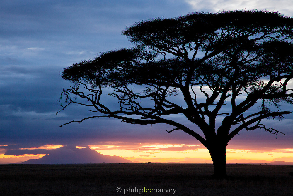 The silhouette of an acacia tree on the plains of Amboseli National Park, Kenya