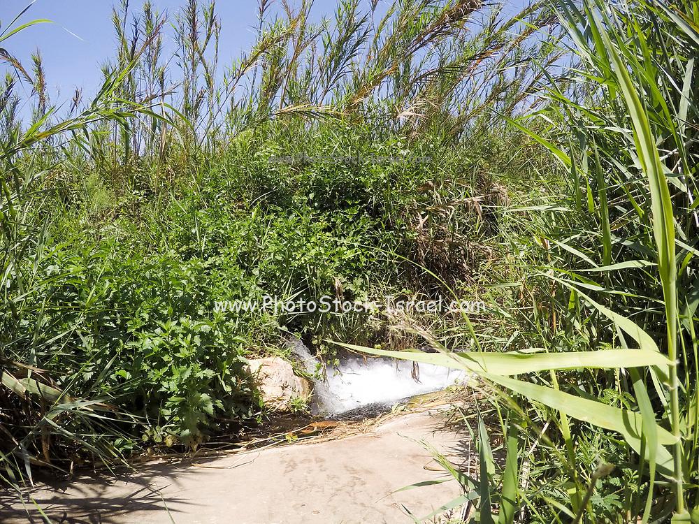 natural Israeli landscape. Photographed in Israel in September