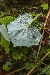 THEMENBILD - Tautropfen auf einem Blatt, aufgenommen am 28. April 2019, Kaprun, Österreich // Dew drops on a leaf on 2019/04/28, Kaprun, Austria. EXPA Pictures © 2019, PhotoCredit: EXPA/ Stefanie Oberhauser