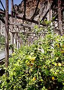 Lemon farm, Limonde Sul Garda, Lake Garda, Italy