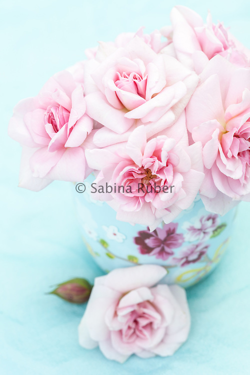 Still Life with turquoise flower mug, pale pink 'sweet heart' roses (R.'Cecile Brunner') on pale blue back ground