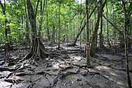 Forests around the Sambu River. Embera Indigenous Community. Sambu District. Darien Region.