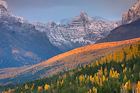Little Matterhorn 2403 m (7884 ft) glows in the evening light above forest dotted with autumn colrs, Glacier National Park Montana USA