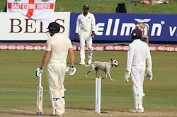 November 23, 2018 - Colombo, Sri Lanka - A Dog invades the playing area during the 1st day's play in the 3rd and final test cricket match between England and Sri Lanka at SSC international cricket stadium, Colombo, Sri Lanka. 11-23-2018  (Credit Image: © Tharaka Basnayaka/NurPhoto via ZUMA Press)