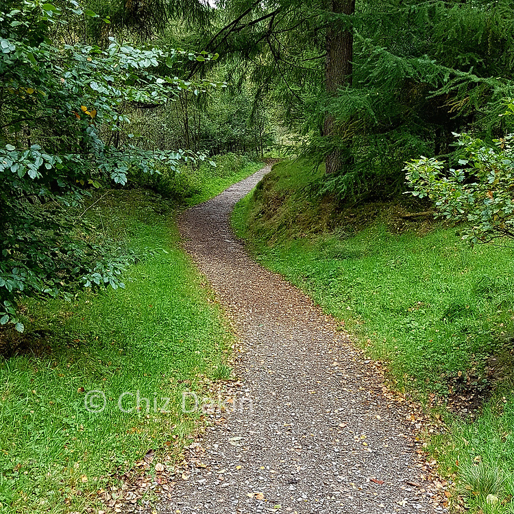 Winding path through the foresty below Standing Stone