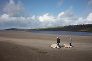People and their dogs at Poppit Sands near St Dogmaels, Pembrokeshire, Wales, United Kingdom. St Dogmaels is a village, parish and community in Pembrokeshire, Wales, on the estuary of the River Teifi, a mile downstream from the town of Cardigan in neighbouring Ceredigion. A little to the north of the village, further along the estuary, lies Poppit Sands beach.