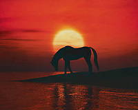 A horse is drinking at a red sunset by a lake. This coastal scene can be printed in different sizes and on different materials. Both on canvas, wood, metal or framed so it certainly fits into your interior. –<br /> -<br /> BUY THIS PRINT AT<br /> <br /> FINE ART AMERICA / PIXELS<br /> ENGLISH<br /> https://janke.pixels.com/featured/horse-drinking-at-sunset-jan-keteleer.html<br /> <br /> <br /> WADM / OH MY PRINTS<br /> DUTCH / FRENCH / GERMAN<br /> https://www.werkaandemuur.nl/nl/shopwerk/Paard-drinkt-bij-zonsondergang/797497/132?mediumId=1&size=70x55<br /> –<br /> -