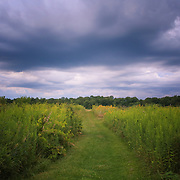 """Convergence""<br />