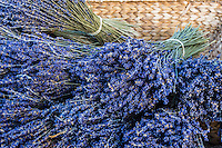 """Lavender or lavandula is a flowering plants ithat is surprisingly iin the mint family.  Many types of lavender are cultivated and used as ornamental plants for garden and landscaping.  They are also used as cooking herbs especially in France and Italy. The color """"lavender blue"""" is named  after the shade of the flowers of this plant."""