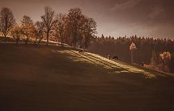 THEMENBILD - Kühe auf einer Weide bei Sonnenuntergang an einem sonnigen Herbsttag, aufgenommen am 10. November 2018, Saalfelden am Steinernen Meer, Österreich // Cows in a pasture at sunset on a sunny autumn day on 2018/11/10, Saalfelden am Steinernen Meer, Austria. EXPA Pictures © 2018, PhotoCredit: EXPA/ JFK