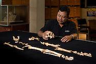 """Thomas Sutikna admires """"LB1"""", the type specimen skeleton of Homo floresiensis, a.k.a., the Flores hobbit."""