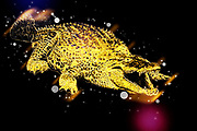 Digitally enhanced image of a Nile River Crocodile (Crocodylus niloticus) with an open mouth