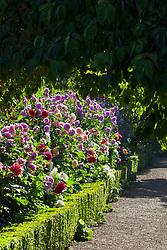 The dahlia border at Rousham House Garden